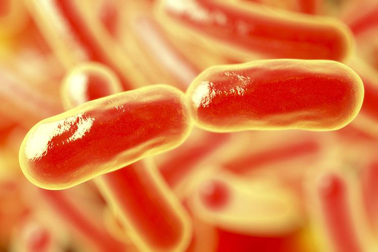 bacteria rods