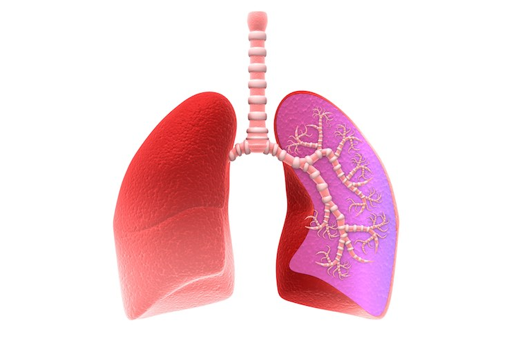Lungs and breathing