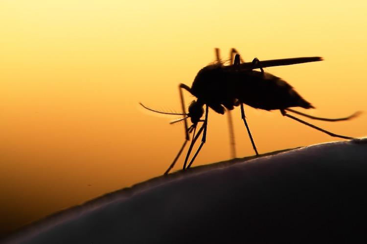 Malaria overview